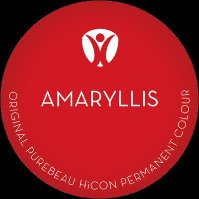 LP amaryllis